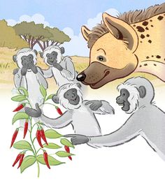 Hyena is tricked by a troop of vervet monkeys. #bookstagram #picturebook #picturebookartist #childrensbook #childrensbookartist #illustration #kidlit #kidlitart #kidlitartist #kidsbooks #booksforkids #raiseareader #read #book #teaching #learning #artist #illustrator #chantelleandburgenthorne