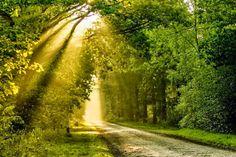 Straaltje zon door de bomen heen