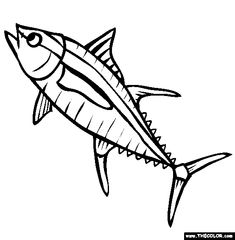CARTOON DRAWING OF YELLOW FIN TUNA - Google Search