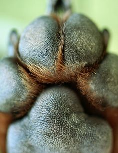There's just something about dog paws......