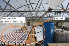 How to build a vertical aquaponic system --- to raise vegetables AND fish!