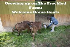 Growing up on The Freckled Farm: Welcome Home Goats