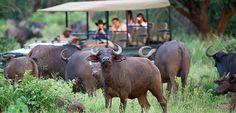 Pafuri wilderness camp Kruger National park