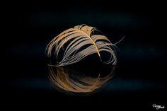 Teresa Fndz Photography:               Feathers