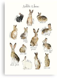 Rabbits & Hares Canvas Print