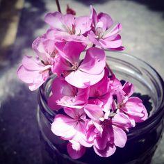 #fresh #flower #pink #nature #shadow