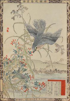Reeds and Hashitaka