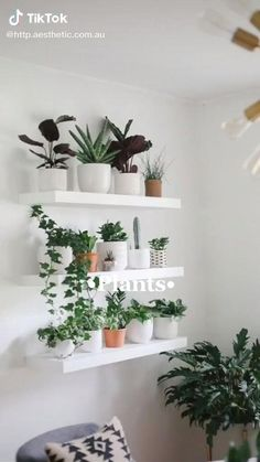 10 Tips for Plant Aesthetic in Small Space Decorating Creating a gorgeous plant aesthetic in small space decorating is very doable. Here are 10 decorating tips for any small or minimalist home. Fake Plants Decor, House Plants Decor, Hanging Plants, Indoor Plants, Indoor Cactus, Cactus Cactus, Indoor Herbs, Indoor Flowers, Patio Plants