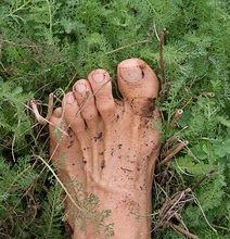 Barefoot gardening...all you need is, well, bare feet. No high heels.