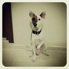 My injured dog Luke waiting his meal...
