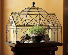 a beautiful warden case, ideal for growing ferns