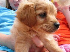 Zoe as a puppy!  Puppy by weaverbl, via Flickr