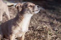 🌐 New free photo at Avopix.com - Smell of freedom    ☑ https://avopix.com/photo/27225-smell-of-freedom    #little #musteline mammal #weasel #afternoon #mammal #avopix #free #photos #public #domain