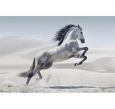 Printed with fade-resistant ink on tempered glass, the White Stallion Photography Glass Wall Art captures a gorgeous grey horse in a majestic stride. This breathtaking piece will make a bold statement in any room of your home. Pretty Horses, Horse Love, Beautiful Horses, Animals Beautiful, Gray Horse, Silver Horse, Andalusian Horse, Horse Galloping, Friesian Horse