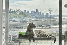 Cat Window Perch Best