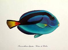 Vintage marine tropical fish lithograph print 1975 antique