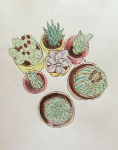 Cactus and succulent illustration  Colored Pencil & Pen by Elizabeth Hudy