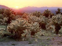 A California desert scene (Photobucket)