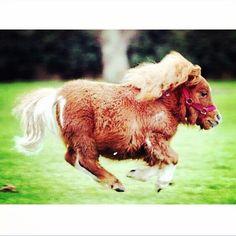 0b2665624 So #funny #horse #saudiarabia #السعودية #الرياض #جدة #الدمام #الخبر #دبي  #أبوظبي #الكويت #البحرين #قطر #الدوحة #عمان #مسقط #الخليج #تويتر #مبتعث  #صباح_الخير ...