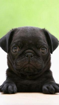 Cute little dog:)