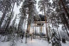 V korunách švédskych ihličnanov vyrástol netradičný stromový hotel :: TOP Reality