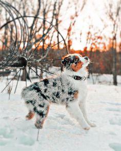 Cute Wild Animals, Baby Animals Pictures, Super Cute Animals, Cute Little Animals, Cute Puppy Photos, Cute Animal Photos, Cute Animal Pictures, Cute Baby Puppies, Super Cute Puppies