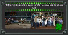 RG Golden King y Mario Alberto López, contundentes en el Campeonato Nacional Día del Charro 2016 que se corrio en el Hipodromo de las Americas. #hipodromodelasamericas #rancholasgaviotas #stallionmexsearch #rggoldenking #elgabo #caballos #carrerasdecaballos #caballocuartodemilla #caballo #caballodecarreras #horse #horseracing #quarterhorse #aqha #charreria #charros
