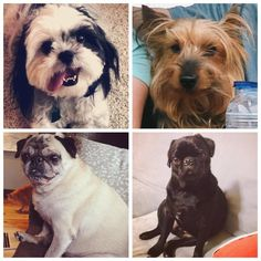 We LOVE our agency dogs at BIGSHOT Inbound!