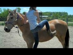 how to get on a horse bareback, plus first time for the horse tips