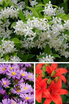 10 fleurs qui poussent sans eau