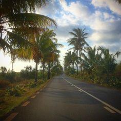 Hier haben die Alleen Palmen.