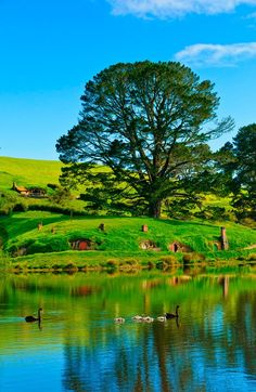 Lord of the Rings and Hobbit set tours in New Zealand. Not that I'm a fan, but I think it would be cool to see those round doors!
