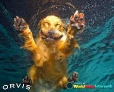 Image result for dog faces underwater