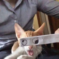 Crazy Kitten @alangren