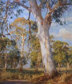 """This painting by John McCartin of Balhannah White Gums. He writes """"White Gums are among my favourite subjects always catching my eye. This majestic specimen stands in a shadowy landscape under the dappled light of the late afternoon sun. Watercolor Trees, Watercolor Landscape, Landscape Art, Landscape Paintings, Landscape Photography, Australian Painting, Australian Artists, Fantasy Paintings, Seascape Paintings"""
