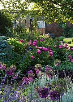 THE WALLED GARDEN AT COWDRAY WEST SUSSEX. : Asset Details -Clive NicholsTHE WALLED GARDEN AT COWDRAY WEST SUSSEX. DESIGNER: JAN HOWARD - EARLY SUMMER BORDER WITH ALLIUM 'PURPLE SENSATION' PINK PAEONIA (PEONIES) AND METAL TRIPODS