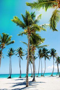 Palm trees on a beach. Love!