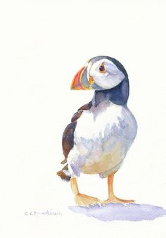 Puffin Painting  - Puffin Fine Art Print