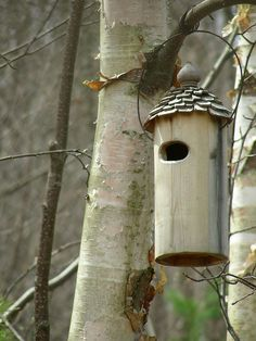 I've put this birdhouse up in the birch grove, but I don't really expect it to be used. Looks nice, though.    How to build nice bird houses