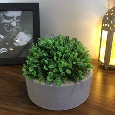 Vaso de cimento Plants, Cement Planters, Grasses, Succulents, Flora, Planters