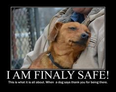 All my animals are rescues. Please spayed/neutered your animals and let's stop…
