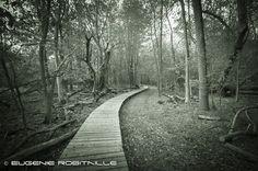 https://flic.kr/p/xwqkRr | Boardwalk at ile Saint-Bernard | Walking path in the woods