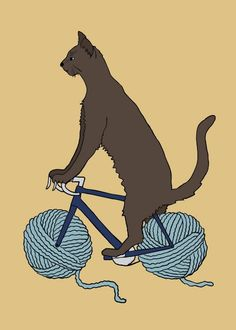 #cat #bicycle