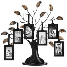 Americanflat Bronze Family Tree Frame with 6 Hanging Picture Frames Each Sized 2 x 3 with Adjustable Ribbon Tassels(Wood) Design: Bronze 12 Family Tree Picture Frames, Family Tree With Pictures, Picture Tree, Hanging Picture Frames, Black Picture Frames, Picture Frame Sets, Picture Hangers, Hanging Pictures, Picture Wall