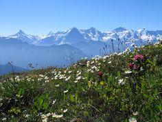 Switzerland, Suisse, Schweiz, Svizzera, Suiça — Interlaken @myinterlaken28 de mar Never getting...