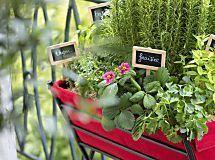 Créer une jardinière d'aromatiques pour une exposition ensoleillée