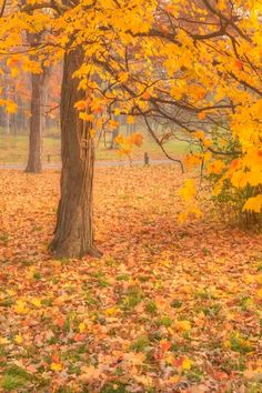 Fall in the Forest 2