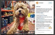 7 Simple Hacks to Earn the Most Followers on Instagram – Marketing and Entrepreneurship – Medium