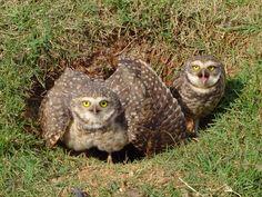 Owl Storytelling: Civetta e Armadillo una curiosità e un'intervista ...