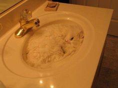 bubble cat.